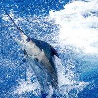 Island of Hawaii Fishing
