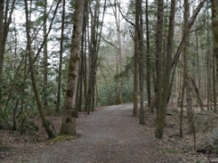 Gatlinburg Trail - Hike the Gatlinburg Trail in the Smoky Mountains