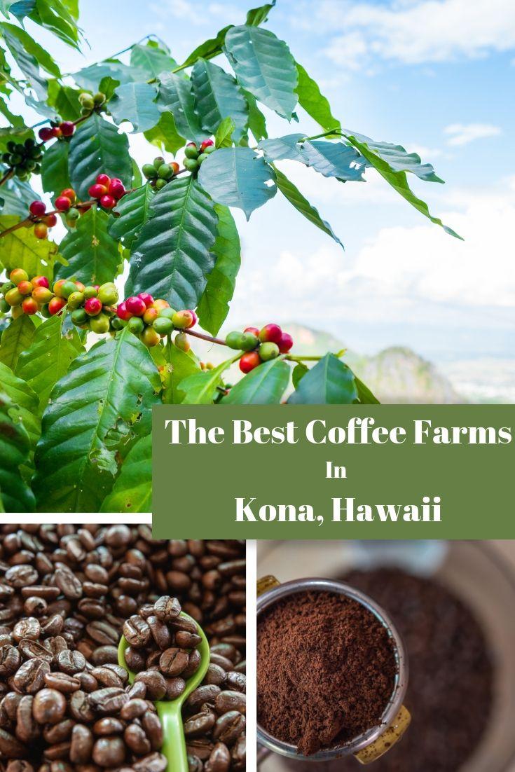 Best Coffee Farms in Kona