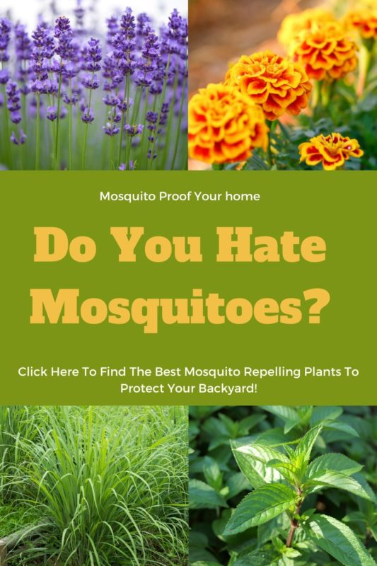 Best Mosquito repelling plants