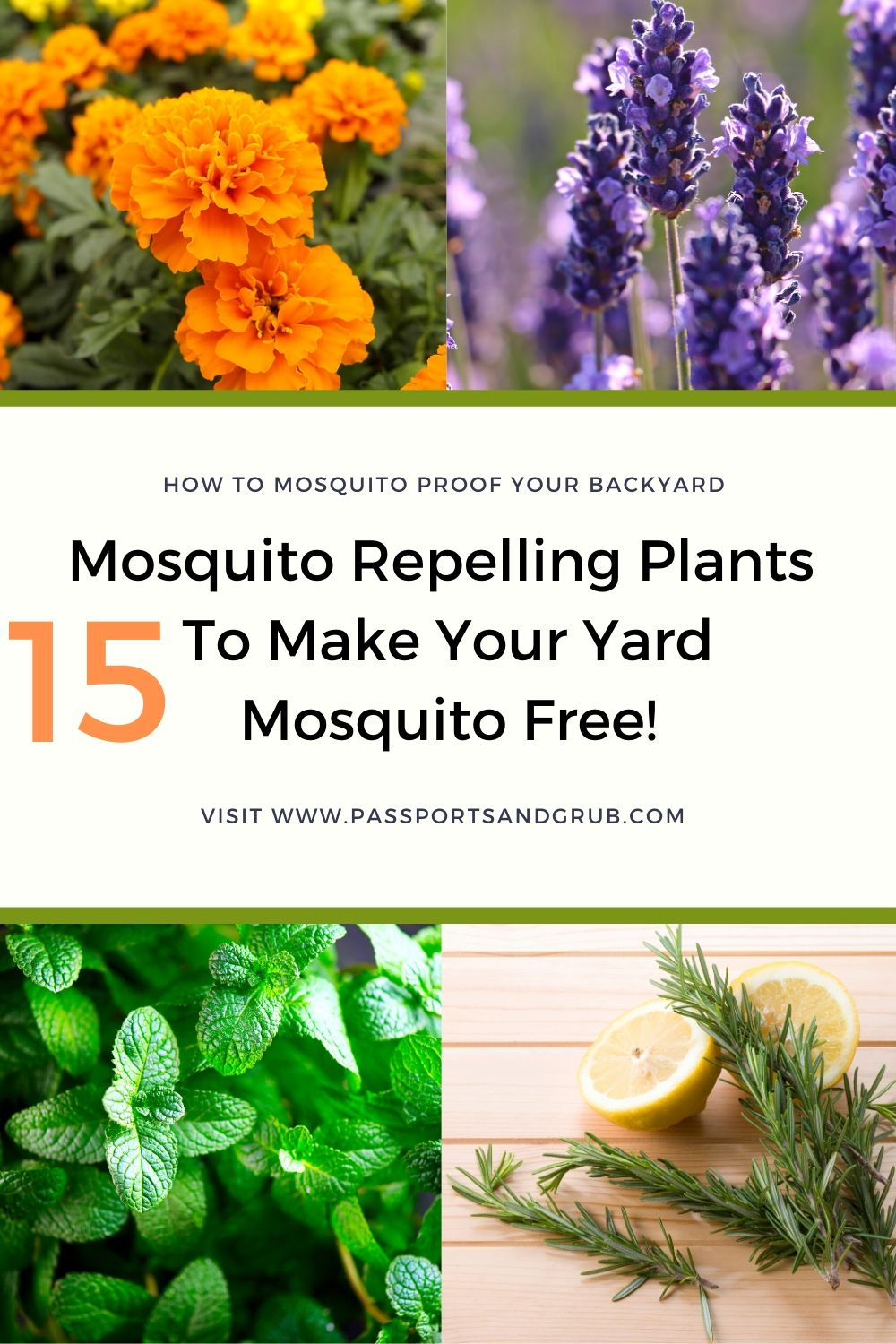 Must Read 15 Mosquito Repellent Plants Every Backyard Needs